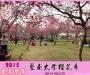 2015暨南大學櫻花季