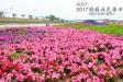 2017貓羅溪花海田(活動已結束)