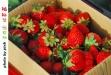 大湖採草莓-雲洞仙居-0DSC_0758.jpg