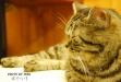 橘光呼嚕貓咪主題餐廳