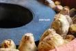 蕃薯市蜜地瓜