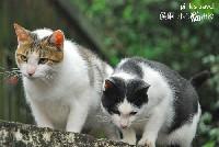 「侯硐一日遊」猴硐貓村