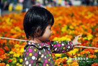 2011/11/12花海節與花毯節