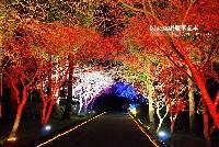 九族櫻花季2017