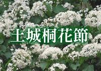 土城桐花節