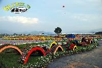 2012/11/14(三)花況
