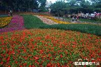 【彰化芬園旅遊景點】就是愛荔枝樂園(幸福.童話)