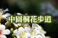 中園桐花步道