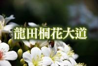 龍田桐花大道