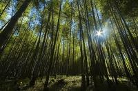 溪頭森林遊樂區~竹海