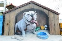 【竹塘景點】長安國小立體彩繪.3D超大鬥牛犬,熱門打卡夯點!