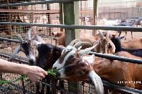 台中益健乳羊牧場