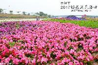 2017貓羅溪花海田