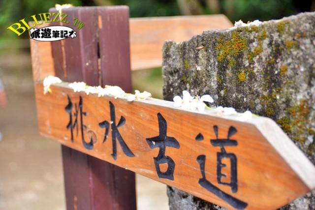 挑水古道桐花季-00-DSC_1792.JPG
