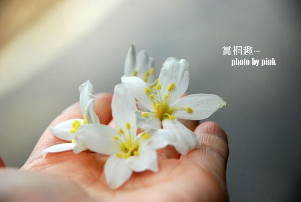 【2012客家桐花祭】彰化芬園德興社區賞桐去~