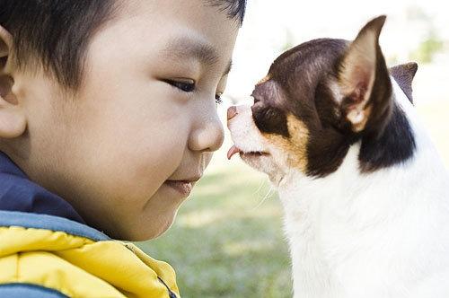 松林吉娃娃寵物樂園-012.jpg