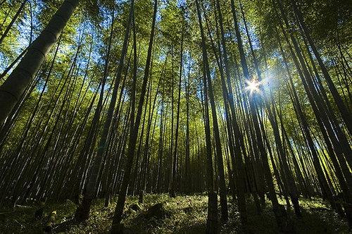 溪頭森林遊樂區~竹海-01.jpg