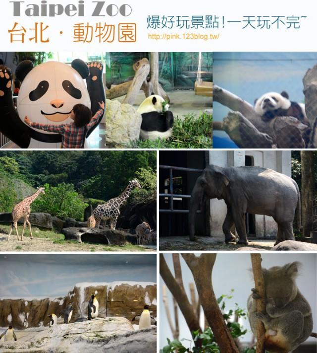 揪團看圓仔,我在台北市立動物園(Taipei
