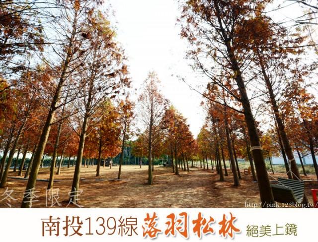南投市落羽松林-1.jpg