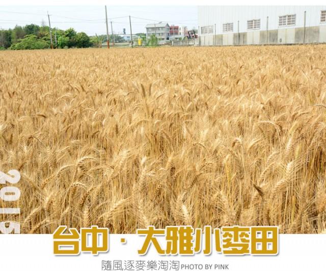 台中大雅小麥田-1.jpg