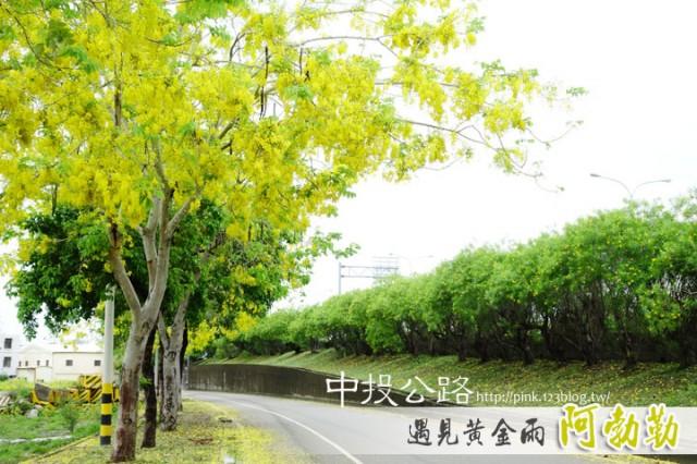 中投公路阿勃勒-1DSC00563.jpg