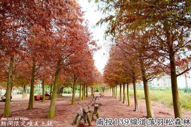 南投市139線道落羽松森林-1.jpg