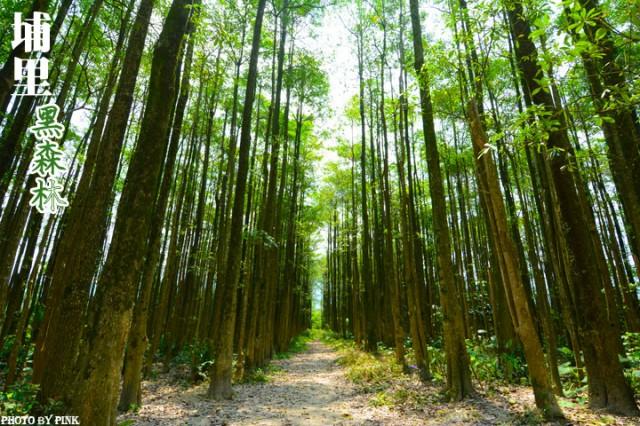 埔里黑森林-1.jpg