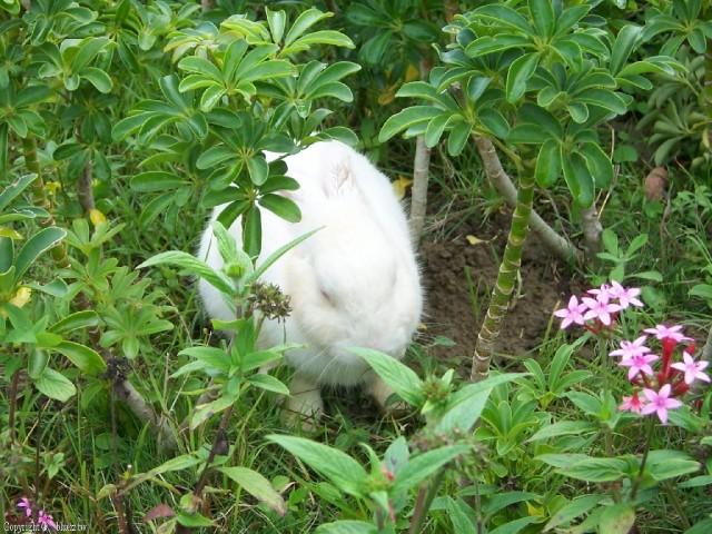 猴探井遊憩區