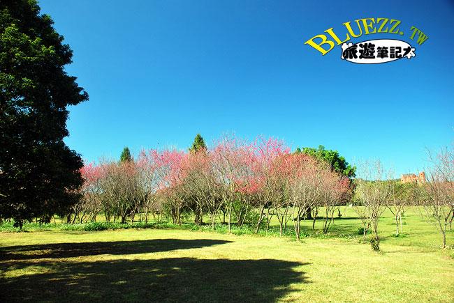 暨南大學櫻花-04.jpg