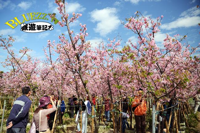 芬園花卉生產休憩園區-01.jpg