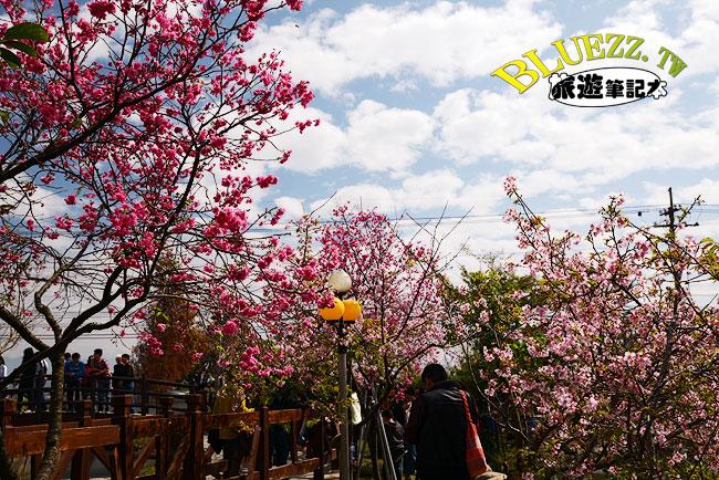 芬園花卉生產休憩園區-10.jpg