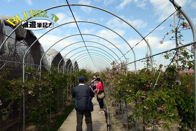 芬園花卉生產休憩園區-11.jpg