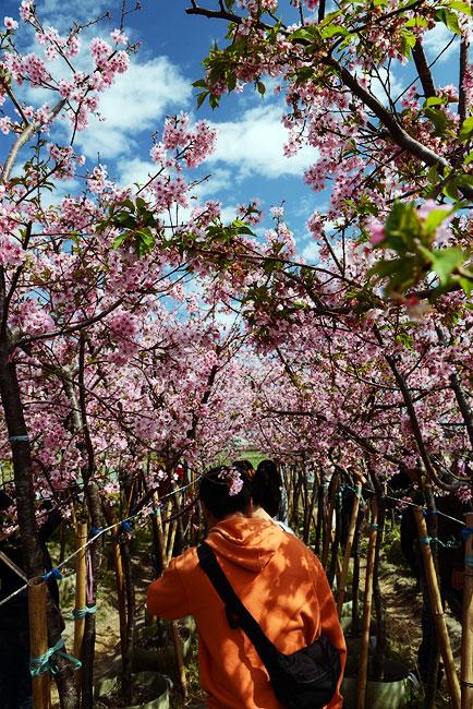 芬園花卉生產休憩園區-12.jpg