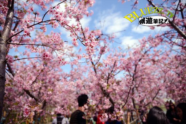 芬園花卉生產休憩園區-13.jpg