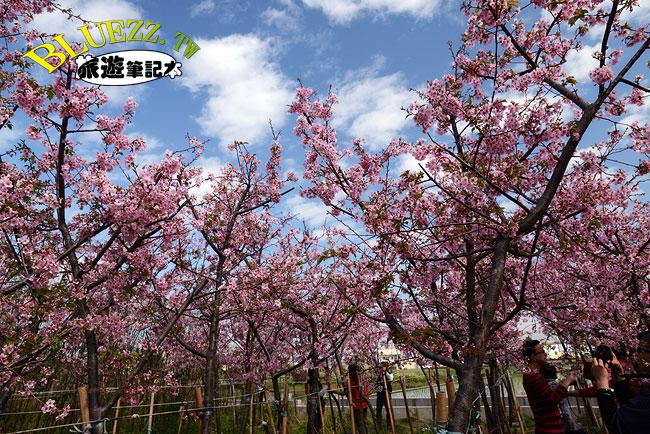 芬園花卉生產休憩園區-15.jpg