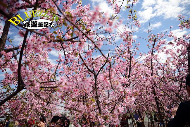芬園花卉生產休憩園區-16.jpg