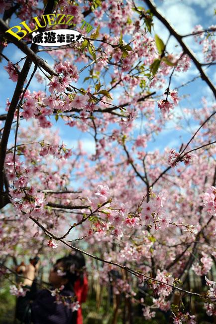 芬園花卉生產休憩園區-17.jpg