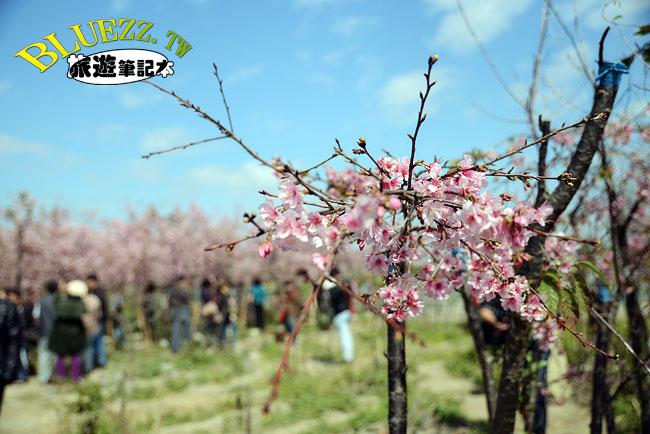 芬園花卉生產休憩園區-18.jpg