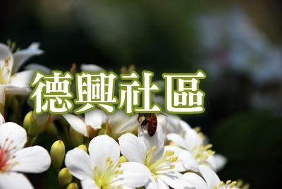 德興社區桐花-德興社區.jpg