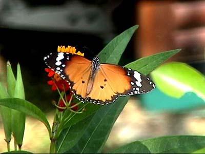 蝴蝶身影一