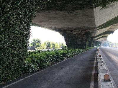 蘭花蕨鐵馬道