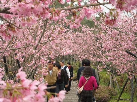 鳳凰自然教育園區(台大茶園)