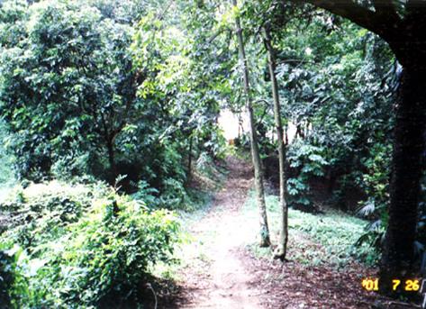 台大熱帶樹木標本園