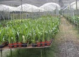 龍坑花卉農場