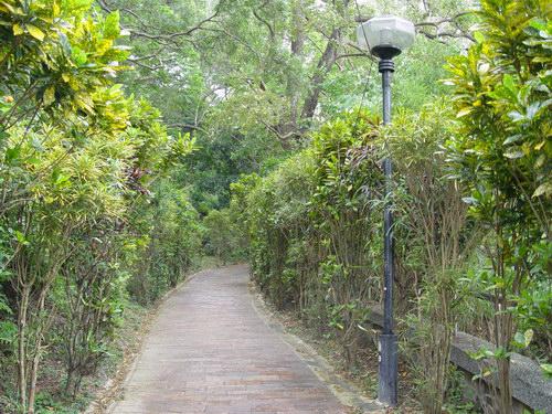 變葉木步道