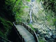 森林步道(阿管處提供)