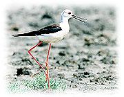 福寶溼地賞鳥