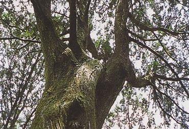 肖楠巨林群