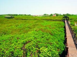 紅毛港濱海遊憩區 紅樹林