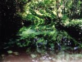 鴛鴦湖自然生態保育